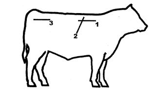 Ultrasound Graphic