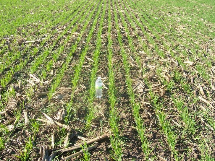 Reins Oats planted 3-20-17