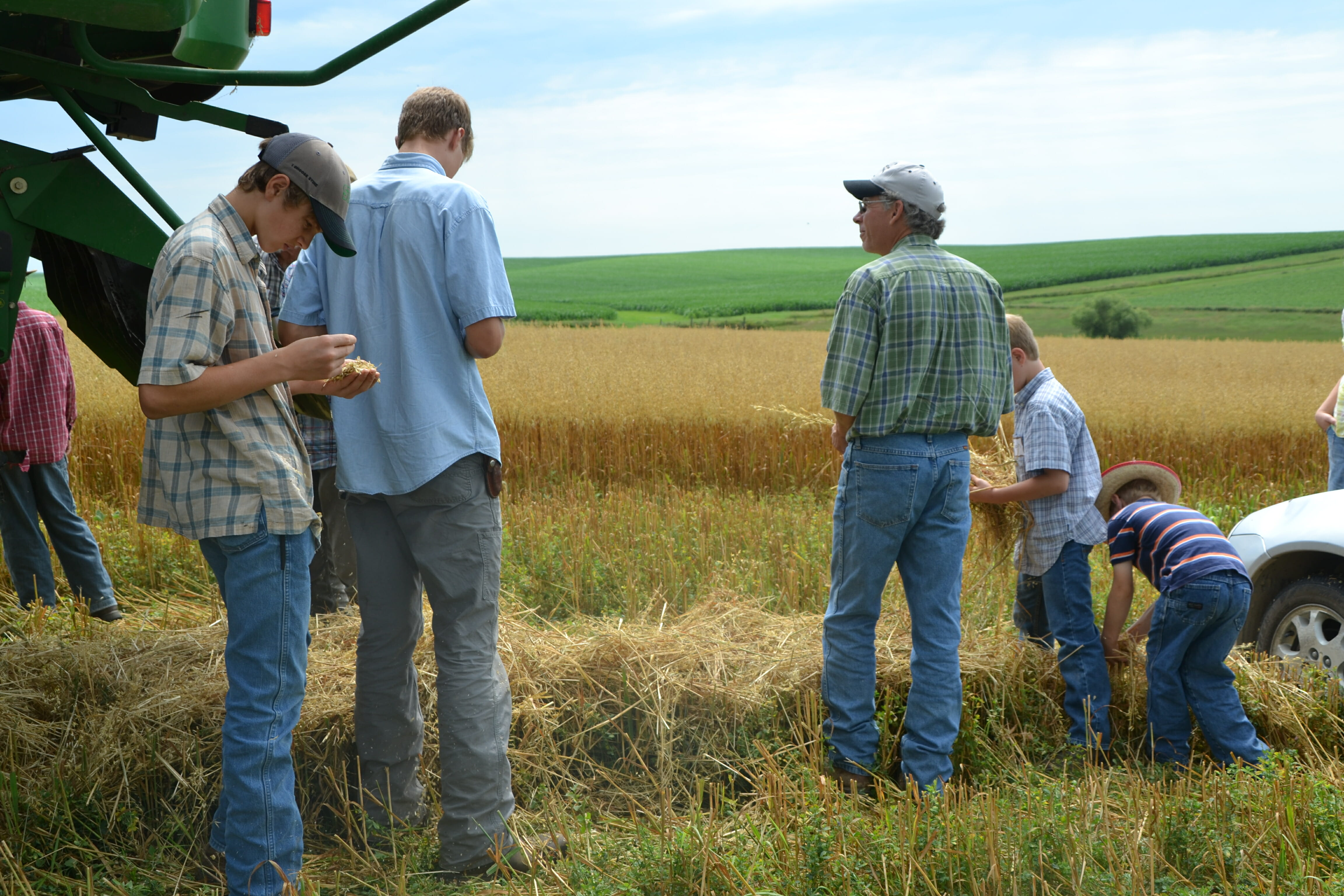Attendees inspect the alfalfa underseeding from a harvested swath of oats.