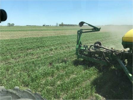 A green corn planter moves through a green field of cereal rye with gaps every 30 inches where the planter is placing the corn seed