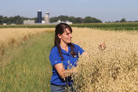 A woman with dark hair and a blue shirt crouches in a field of mature, golden oats inspecting kernels.
